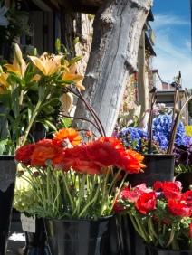flower shoppe-2