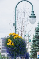 Downtown anchorage 2