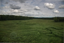 meadow-2