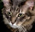 Mac the cat-3