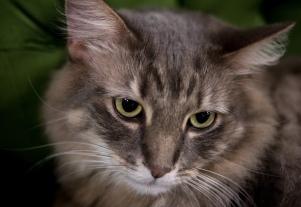 Mac the cat