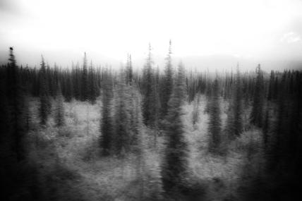 P J Charles Fantastical Wilderness