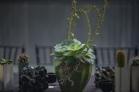 tessa's plant