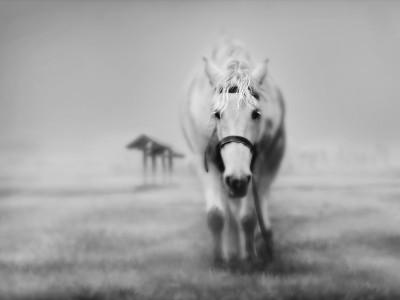 Horse-Wallpaper-10-400x300